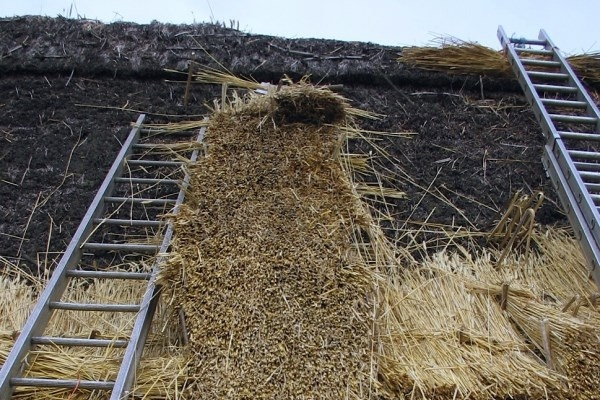 Thatching Stage 2 - Initial coatwork, laying stalches